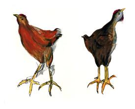 Jonge hanen . 1996 . krijt . 50x65
