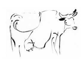 Koe, Frankrijk . 2004 . inkt . 14x22