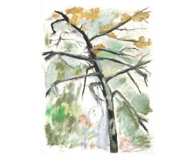 Berkenboom, Frankrijk . ~2005 . 65x50