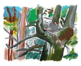 Bomen, Frankrijk . ~2005 . 50x65