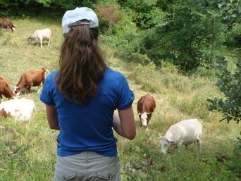 Marianne aan het werk bij de koeien